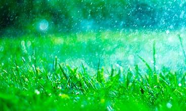 Grass watering
