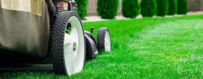 Top 5 Lawn Care Tips: Learn How To Do it By Your Own